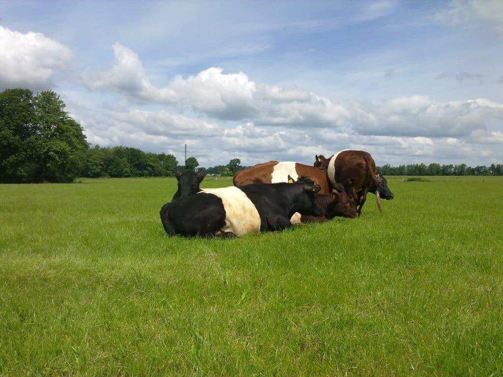 Dieren verzorgen Zorgboerderij De Gaegelpolle